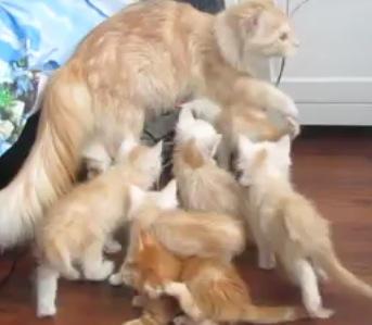 Maman chat fait peur ses petits for Fenetre qui fait peur